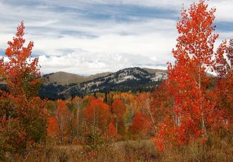 Colorado Fall Foliage: Wonderful Autumn View