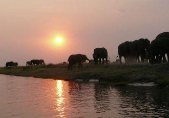 African Safari Preparation, Where To Go?
