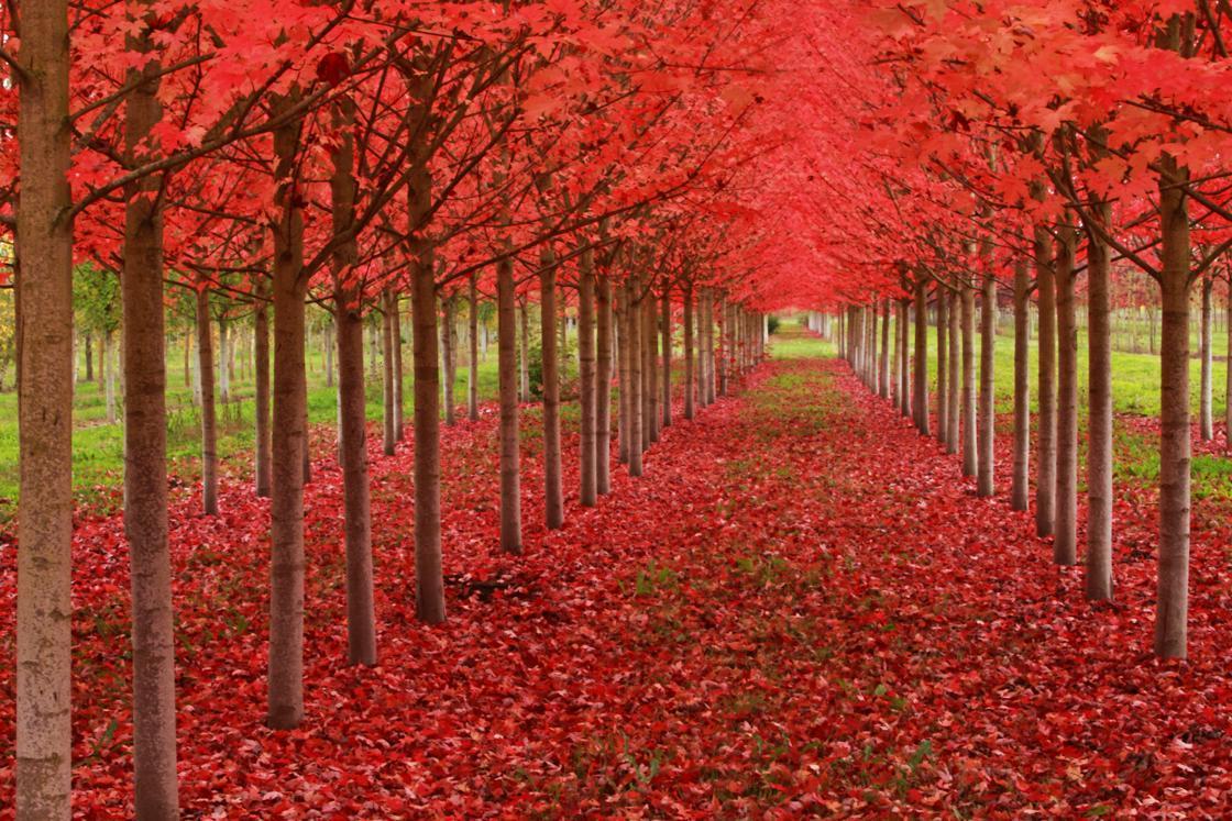Marion, Oregon, United States