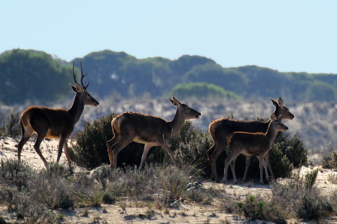 Animals and Wildlife Zamora Spain Deers
