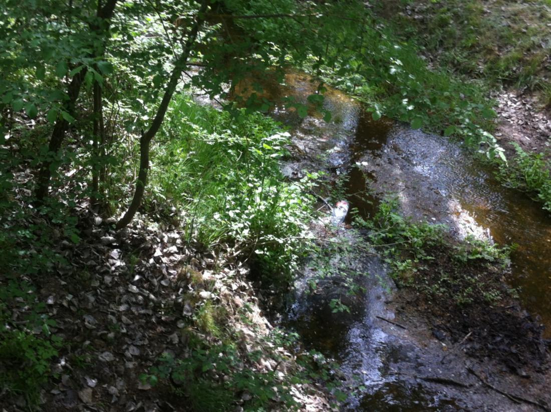 zamora-spain-town-valorio-forest-2
